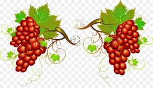 kisspng-wine-grape-clip-art-vector-painted-grapes-5a9be4158cd605.6890157815201659095769