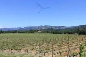 Beautiful Napa Valley!