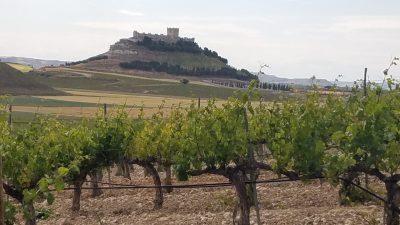 Amazing view over the vineyard in Ribera del Duero