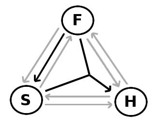 A representation of how the members of the Trinity are related on Swinburne's functional monotheist social trinitarianism