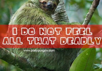 Green sloth doesn't feel all that deadly