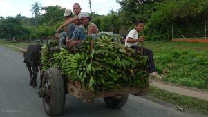 P1220489 NICARGUA green LEAVING RIVAS plantains