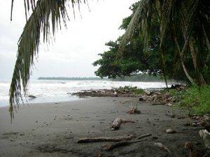 Playa Negra (Cahuita)