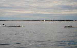 Ballenas en Playas Doradas