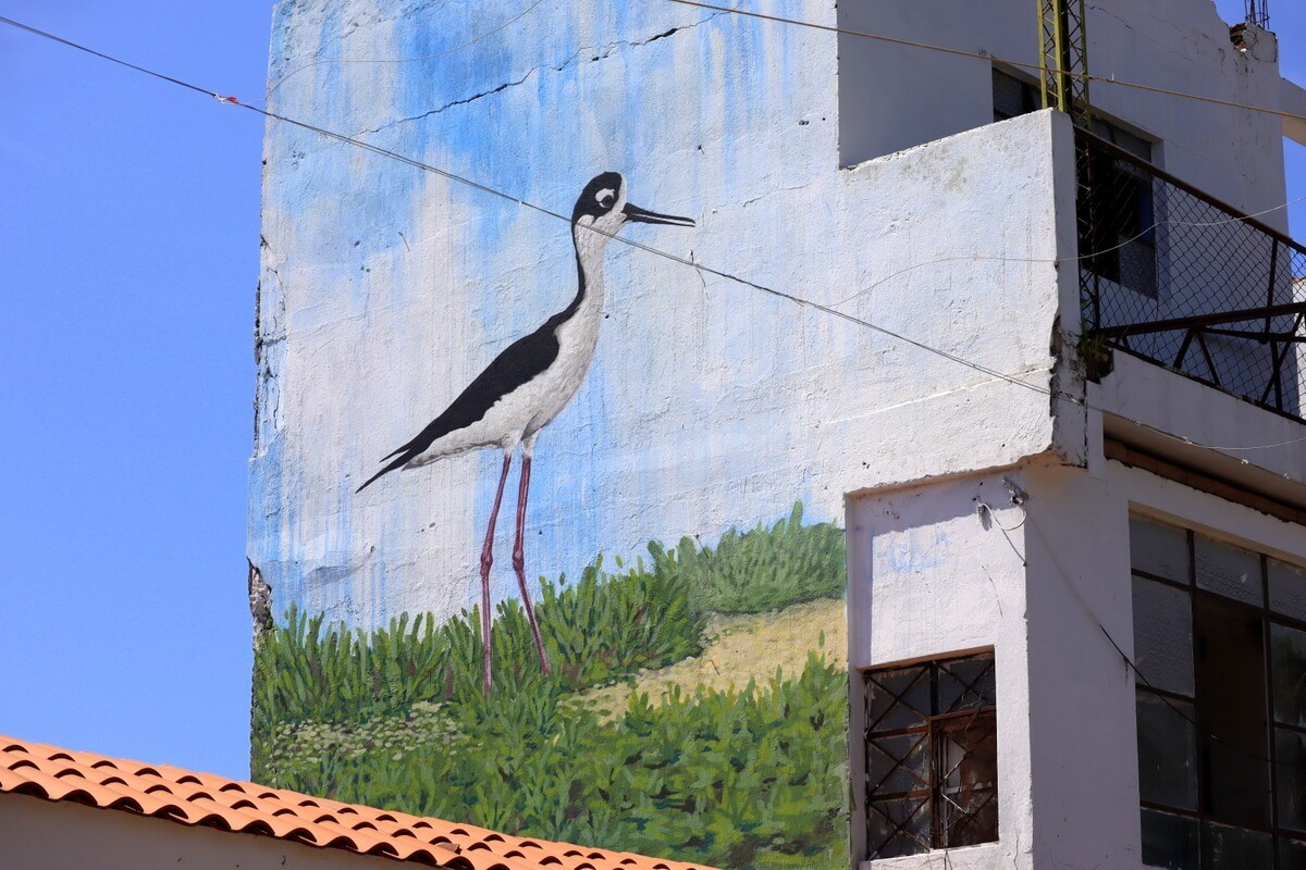 Bird mural painted on a wall in San Blas Nayarit