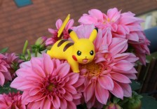How to Find Pikachu