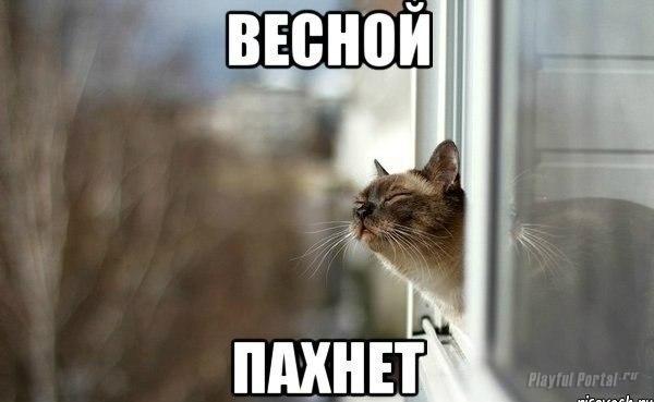 Весной пахнет. Котейка млеет на солнышке!