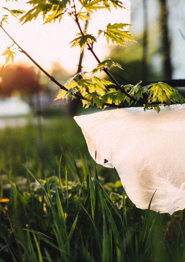 5 ways to minimize your plastic consumption