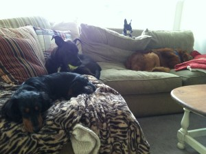 dogs couch