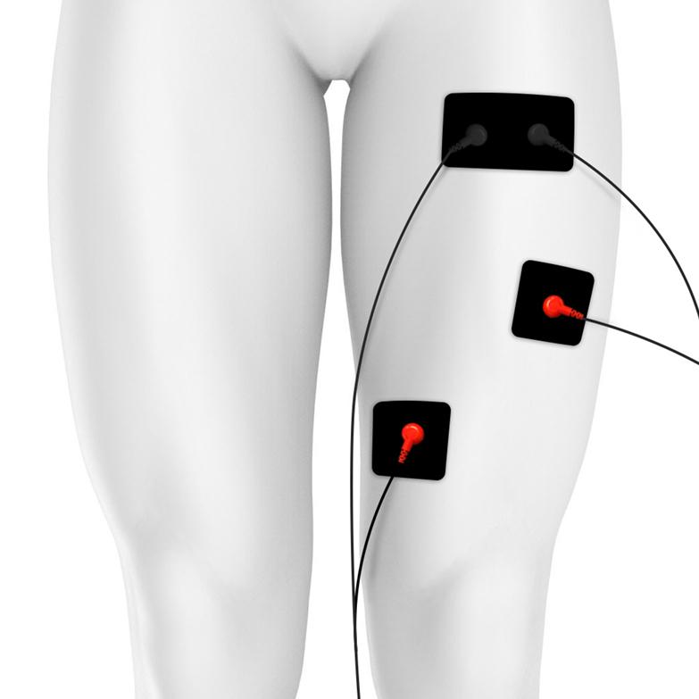 Quadriceps Image