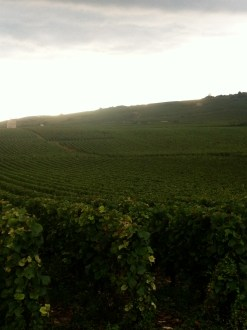 Beautiful vineyards just south of Beaune.