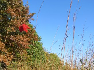The leaves changing color in Lost Lake Nature Preserve.
