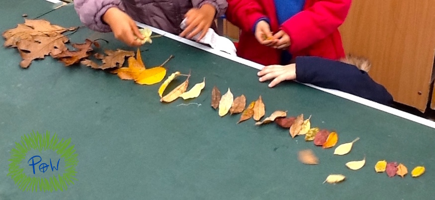 Ordering by length. Longest to shortest. Outdoor shortest to longest activity. Leaf activity for children.