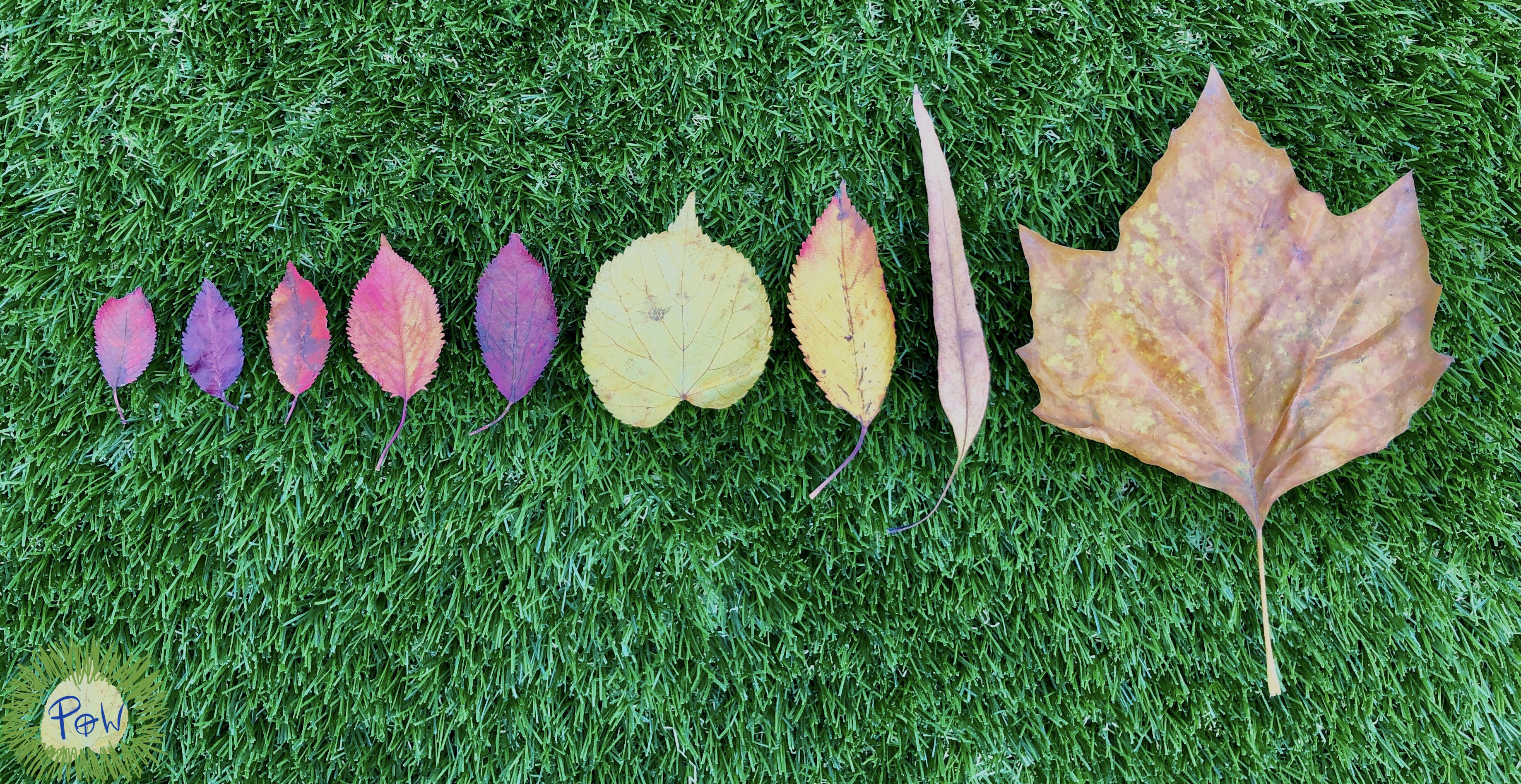shortest to longest. Ordering by length. autumn Leaf activity for children.