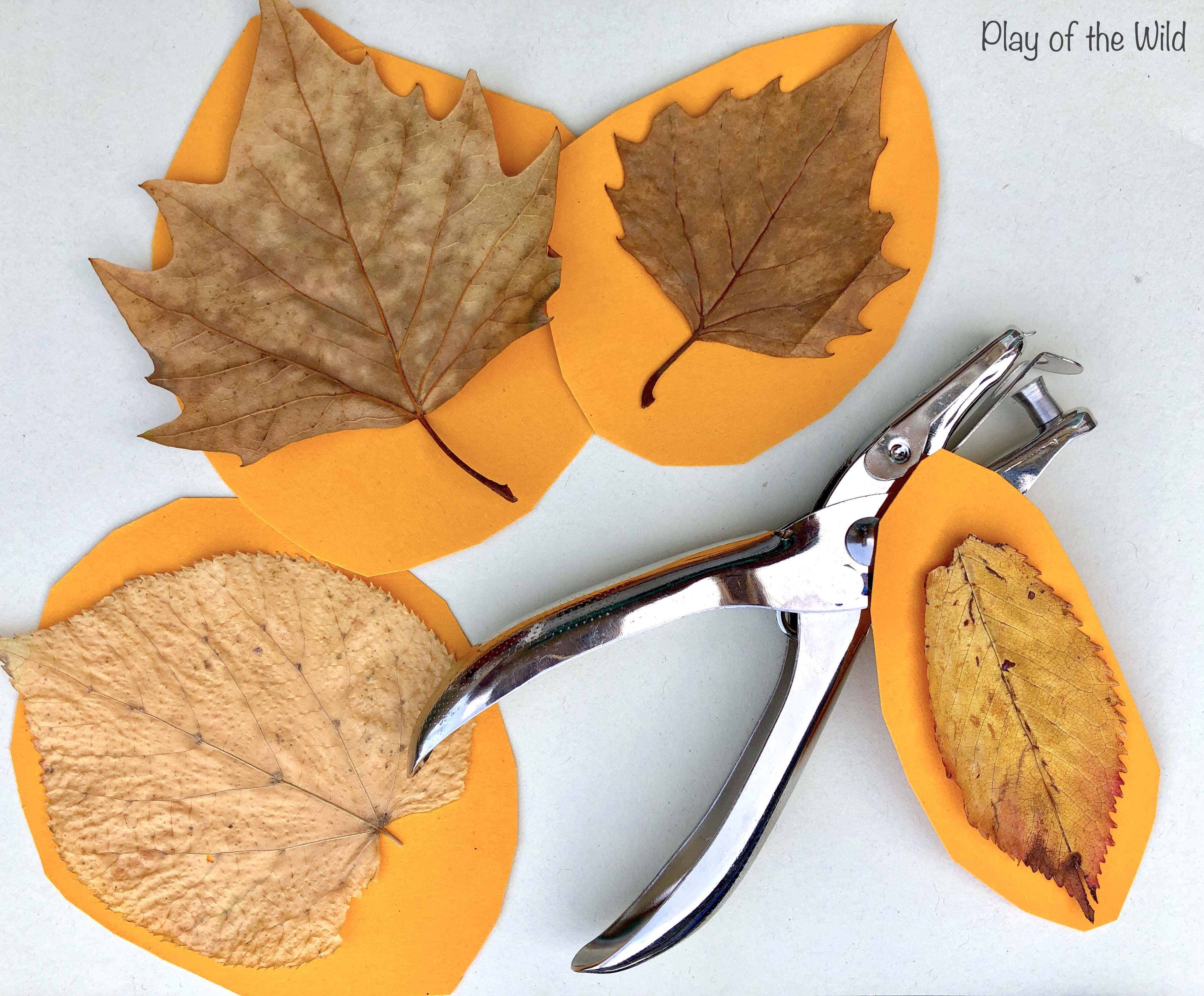 How to make a fall leaf mobile with young children.
