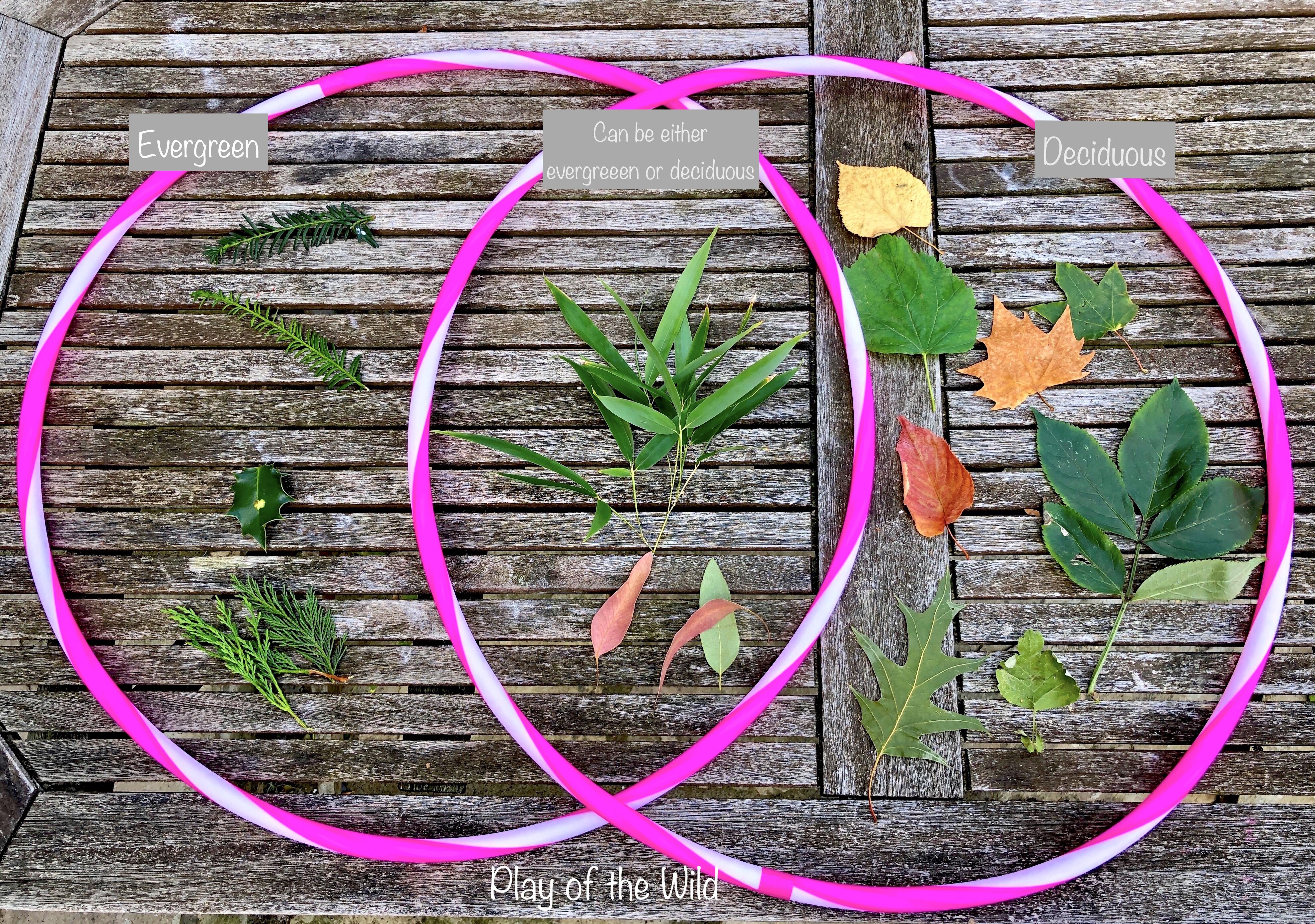 Sorting leaves with kids. Venn Diagrams for Children