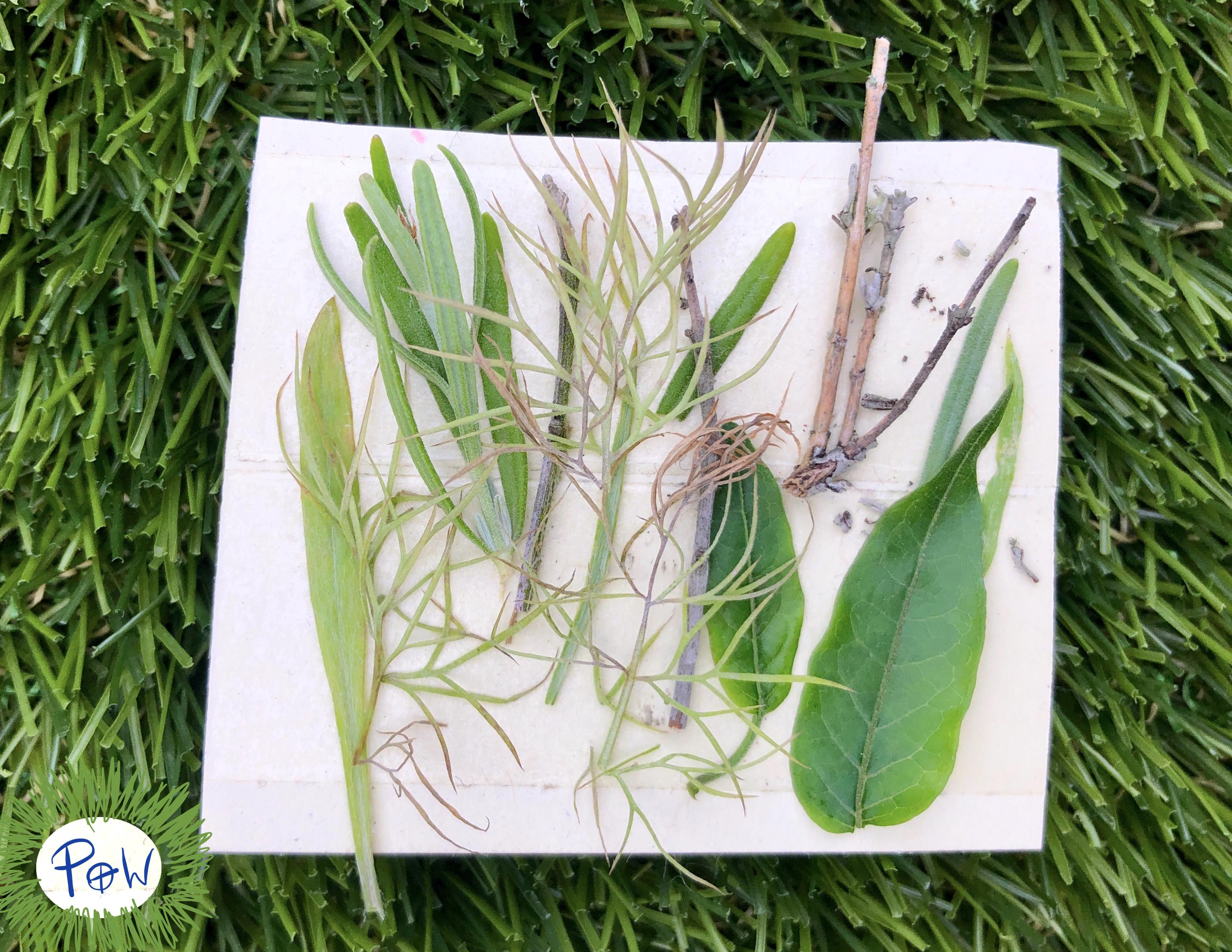 Outdoor Nature Art Activity for children. Miniature art collage.