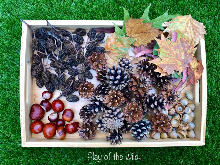 Autumn objects for children to count.