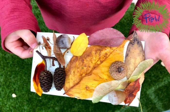 Outdoor Nature Art Activity.  Autumn nature collage.
