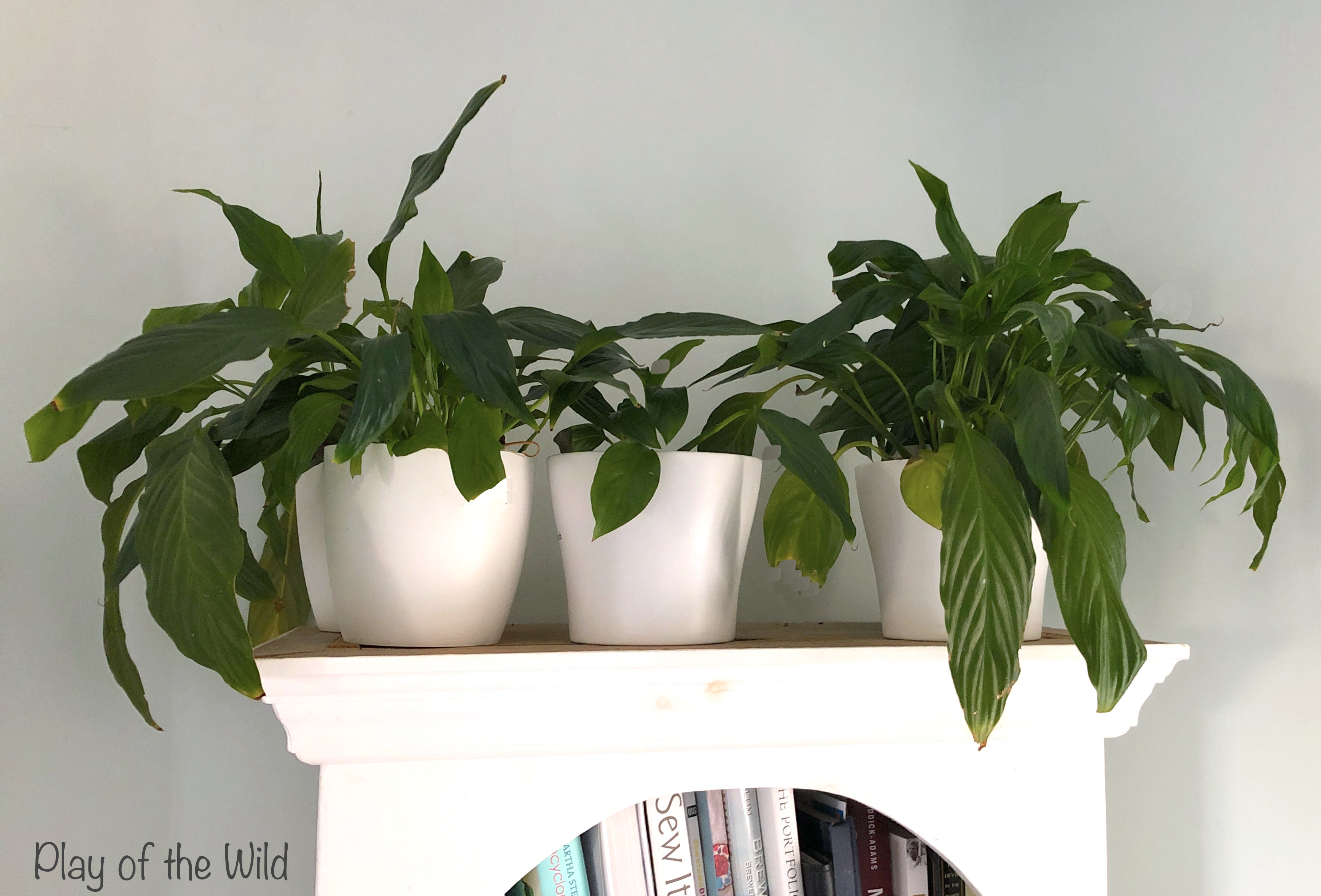 Peace lilies to purify