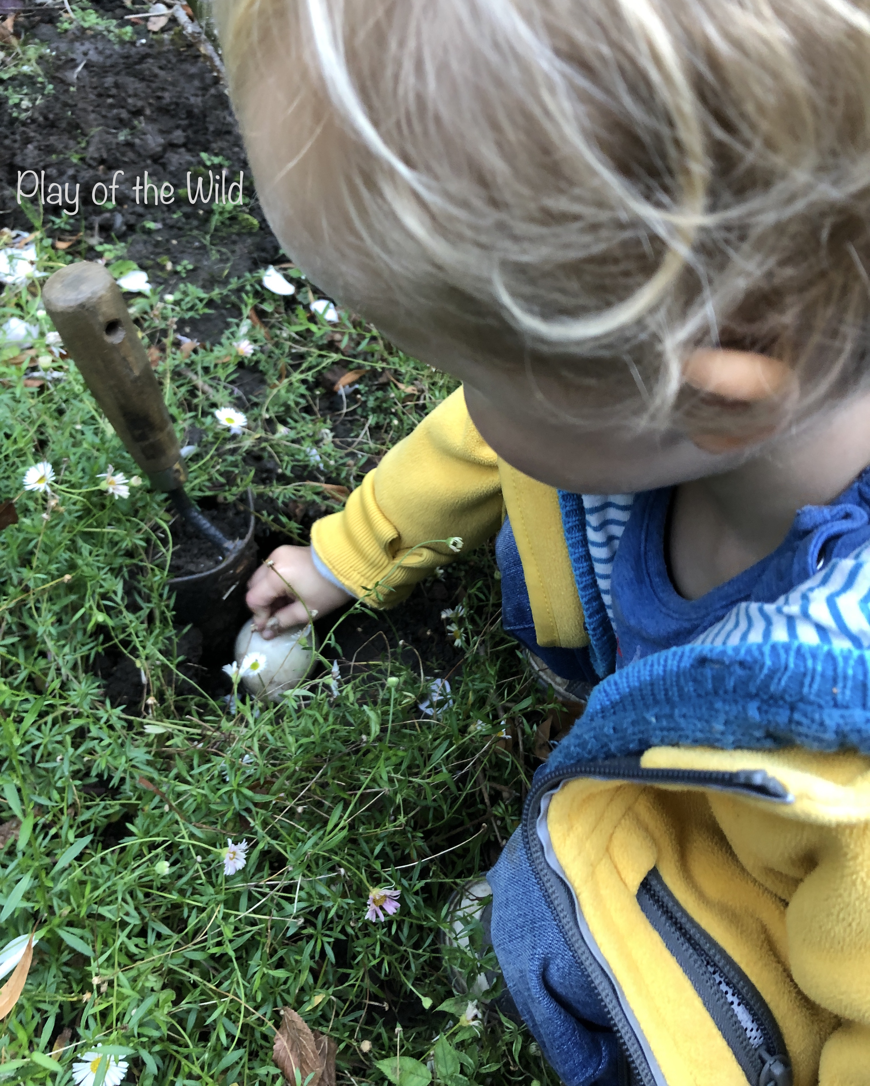 The Best Gardening Bulbs for Kids. Planting bulbs with children.