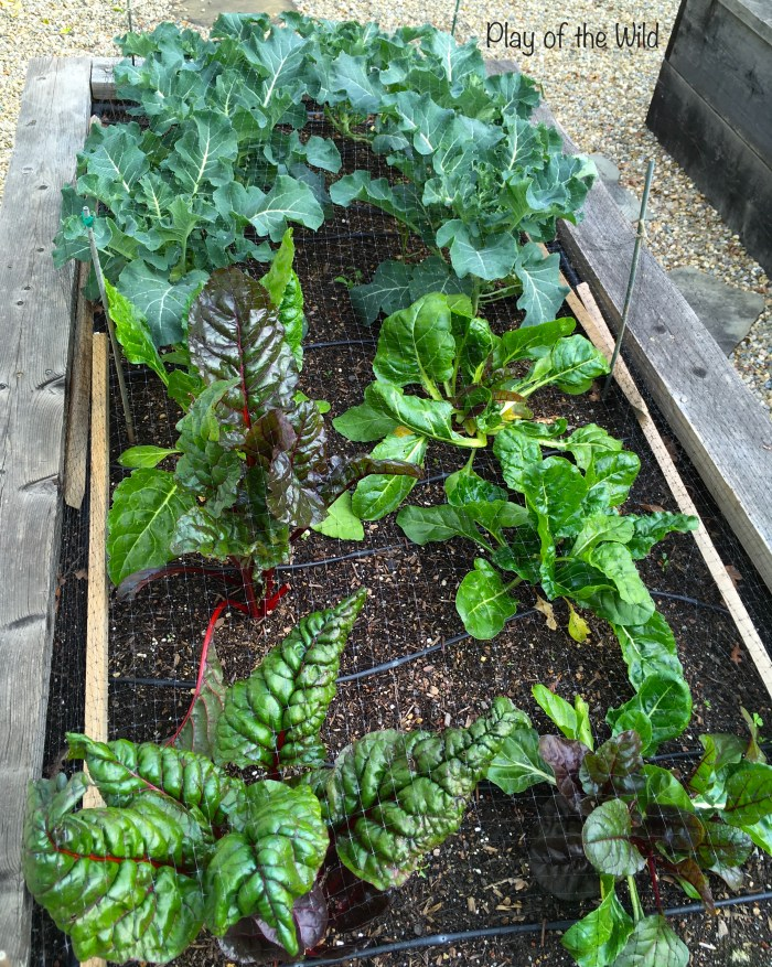 winter vegetables to grow with children