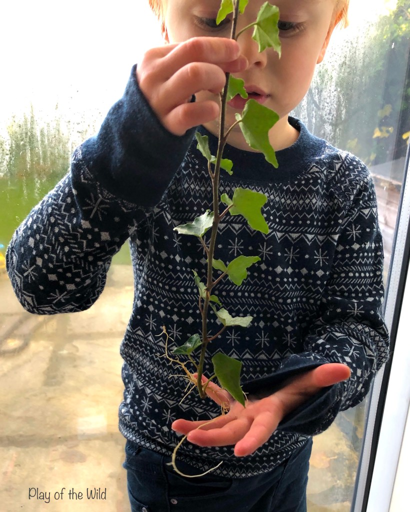 Propagating Plants in Water. rooting ivy plants with children. EYFS Activities for Toddlers and Preschoolers at home.