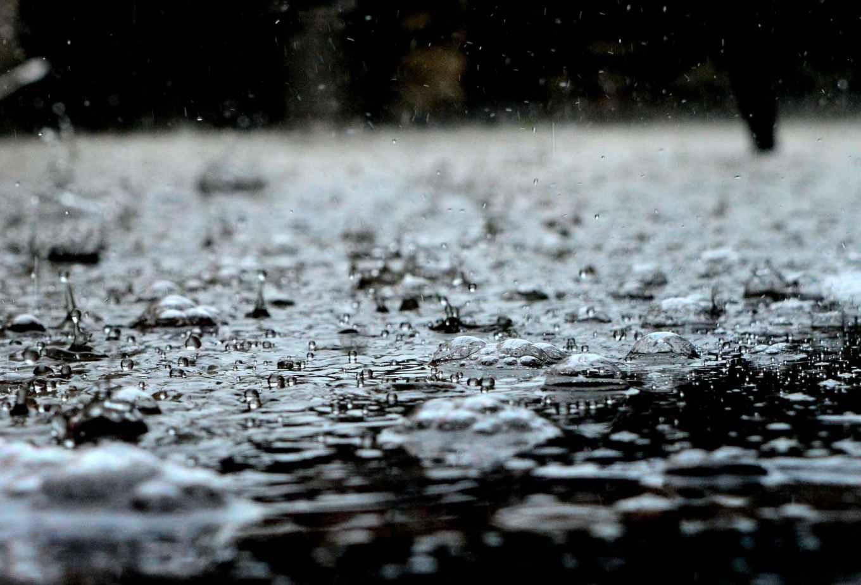 Rain Garden - Collecting Rainwater for Plants