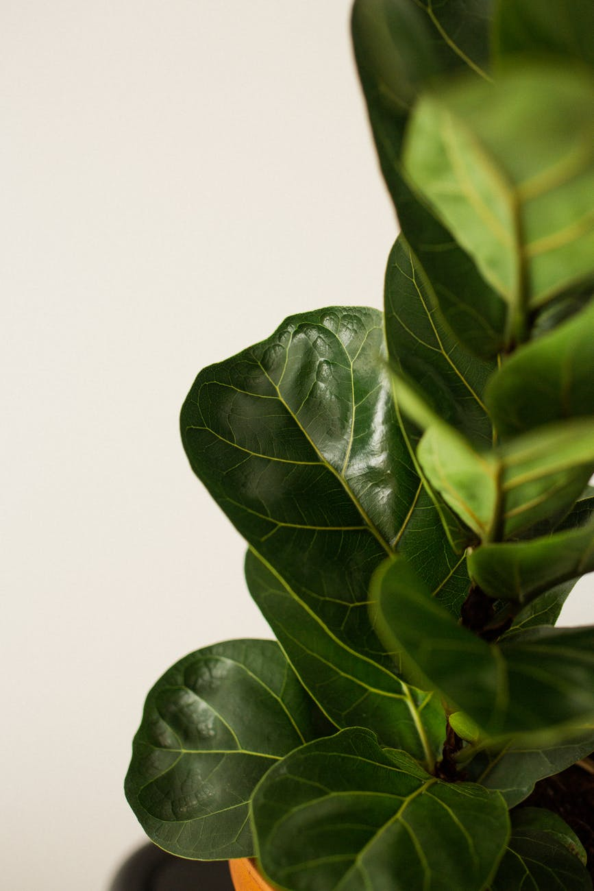 Quick Growing Indoor Plants for Home or Classroom