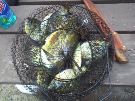 Fish basket with a 15 inch largemouth bass