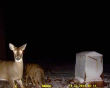 This doe was very suspicious of the thing flashing bright light at her in the utter darkness.