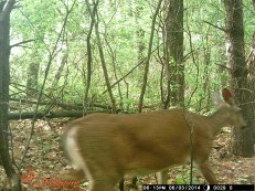 Much healthier looking deer