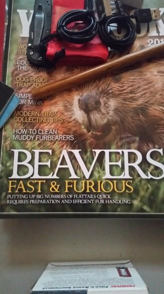 Beaver jokes for days.