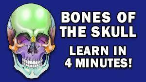 Skull And Bones CODEX SKIDROW & CODEX GAMES