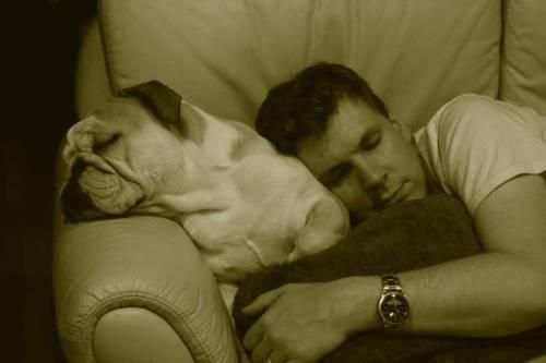 el perro y su amo durmiendo juntos