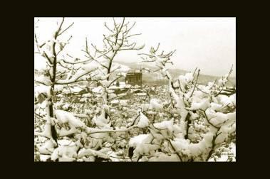 Castaños nevados