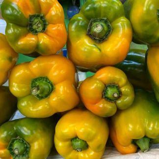 Pimentón-amarillo-lb-paloquemao