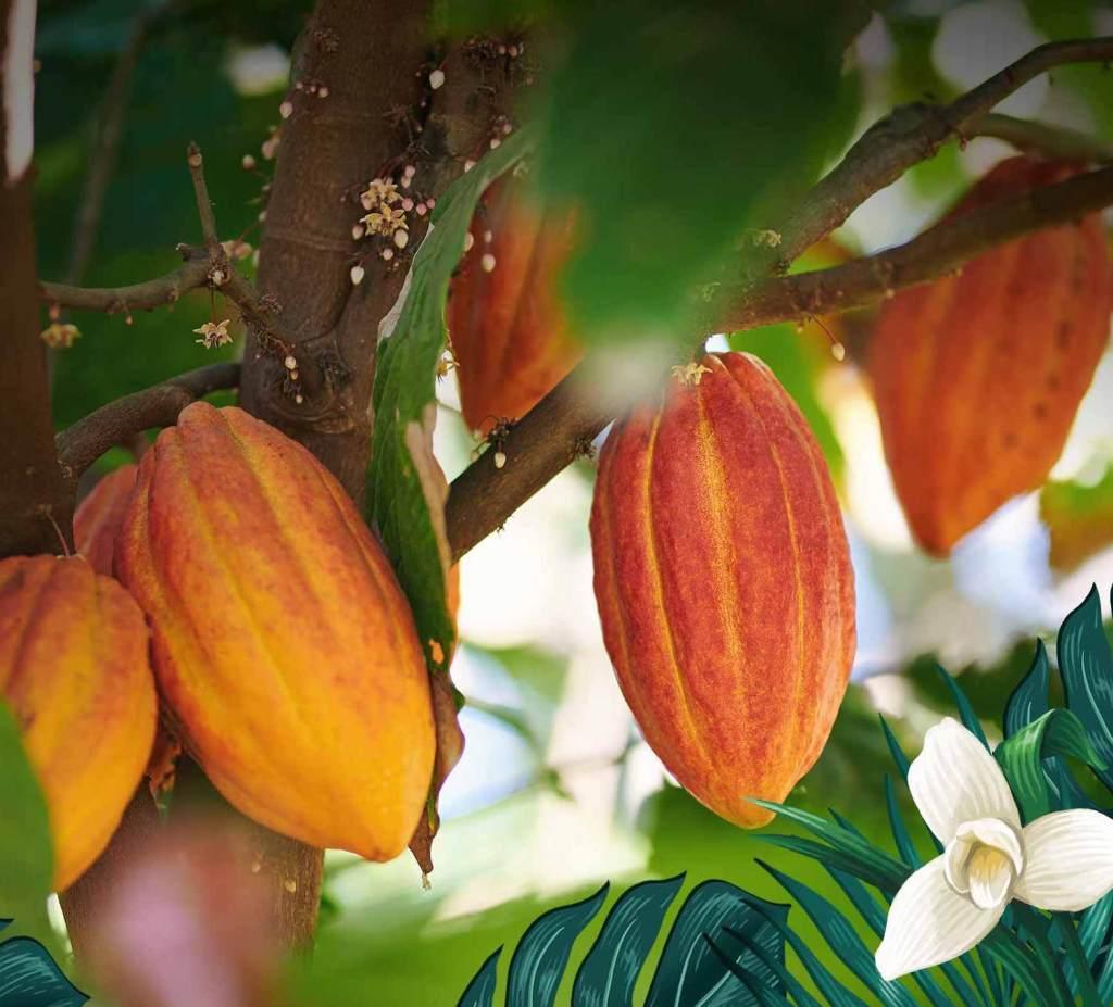 Secha de la Silva Rhum cacao