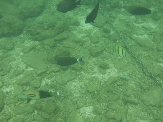 北谷の海の魚