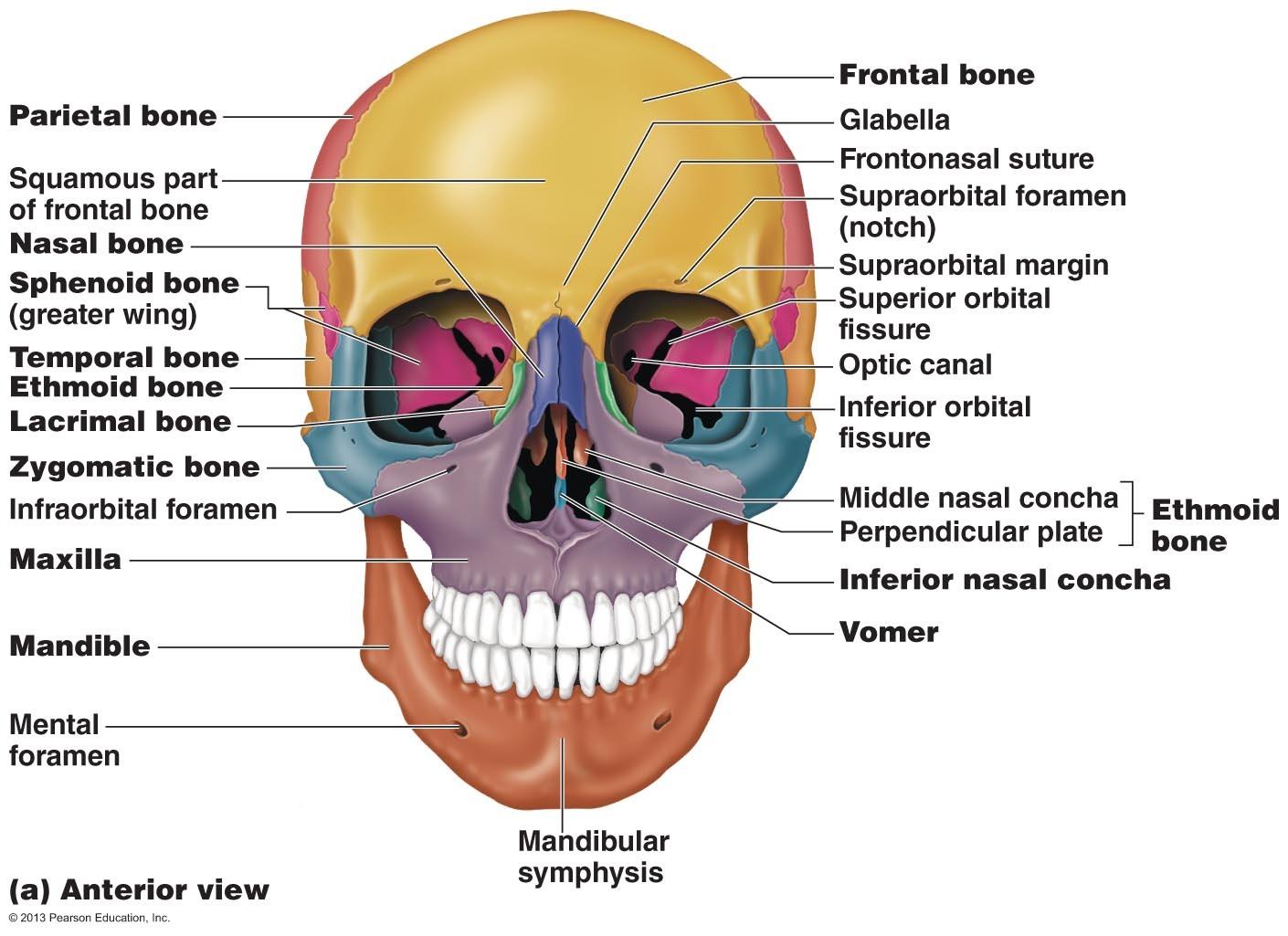 Anatomy Pleasureinlearning