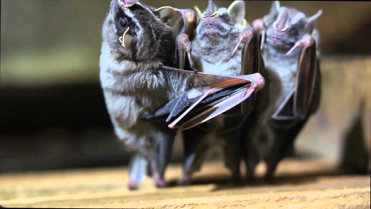 The Dancing Bat Brothers Pleated Jeans
