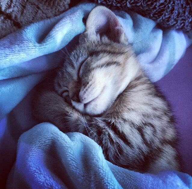 21 Adorable Tucked In Cats