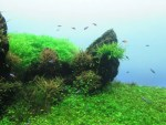 熱帯魚を飼育しよう!熱帯魚を飼育するために必要な基本知識を紹介!!