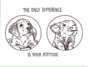 the-only-difference-is-your-attitude