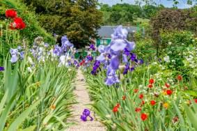 Iris et coquelicots
