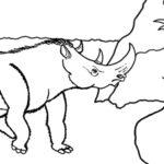 wolharige neushoorn FIN