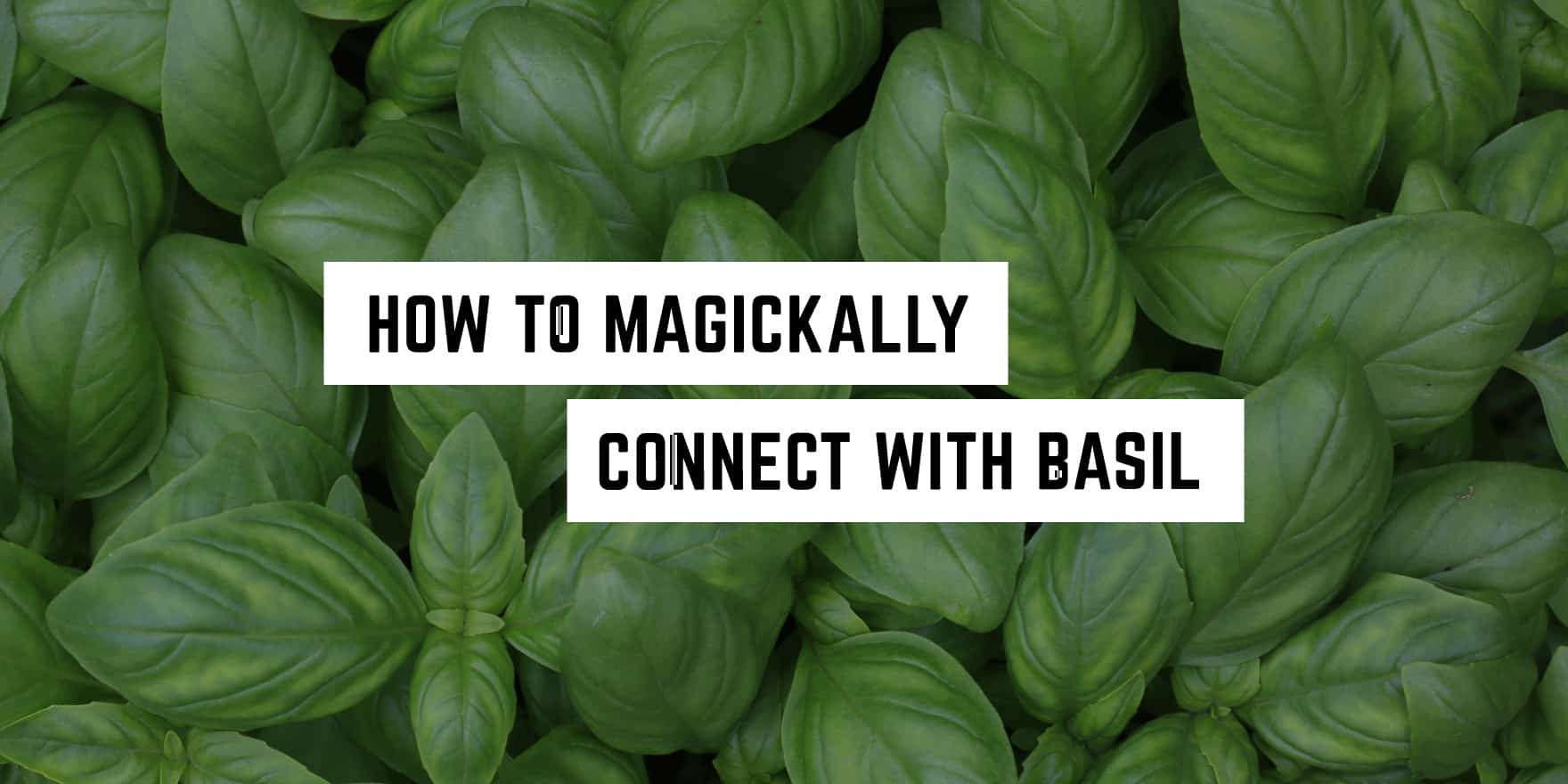 How To Magickally Connect With Basil Plentiful Earth