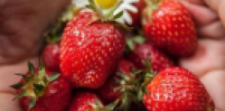 VEGBRED'S smart sweet potato loaf is the new staple for healthy eaters