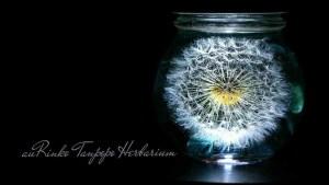 まるで小さな花火のような可愛らしさ「たんぽぽハーバリウム」が商品化