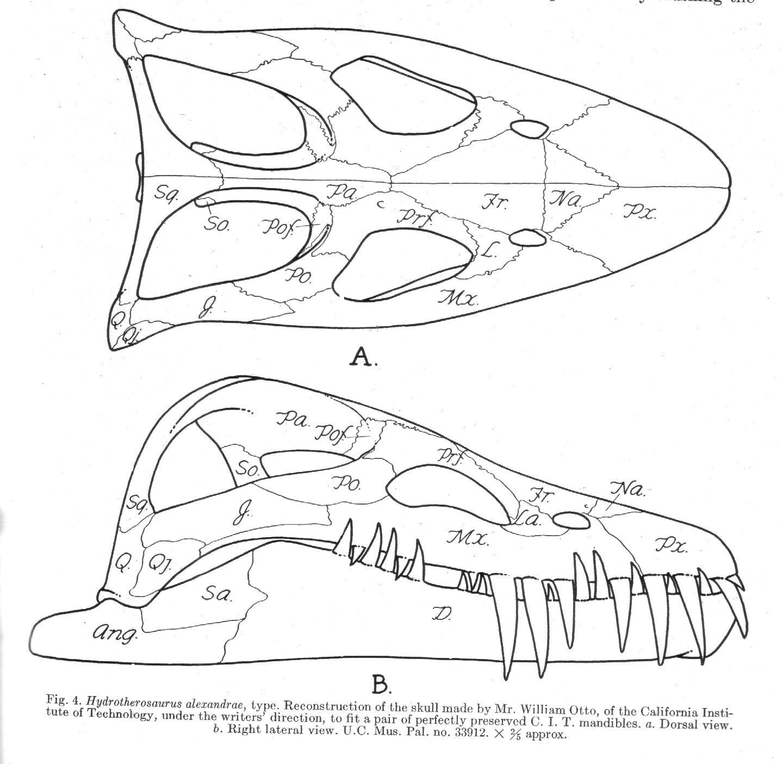 The Plesiosaur Directory